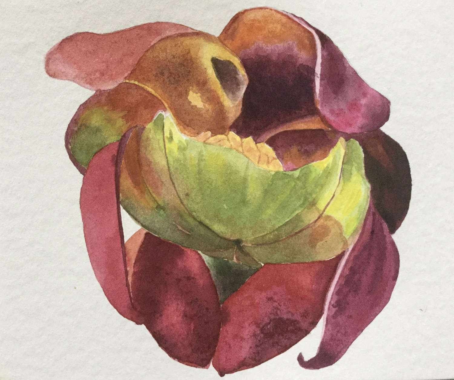 Picture Plant Petals | Sharon Goodyear