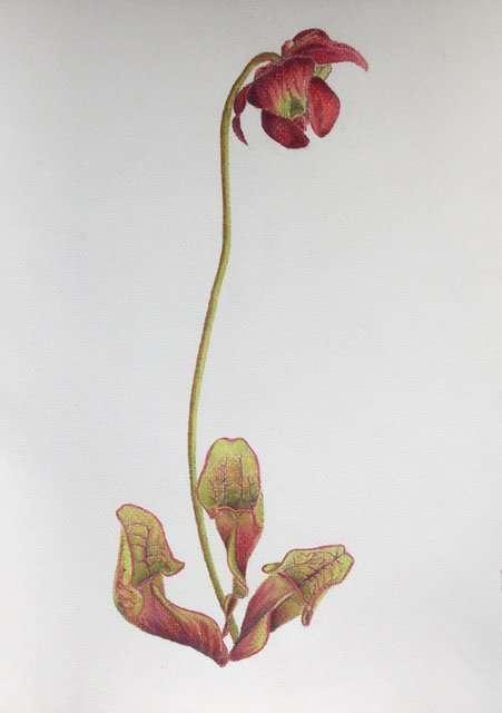 Flowers | Sharon Goodyear