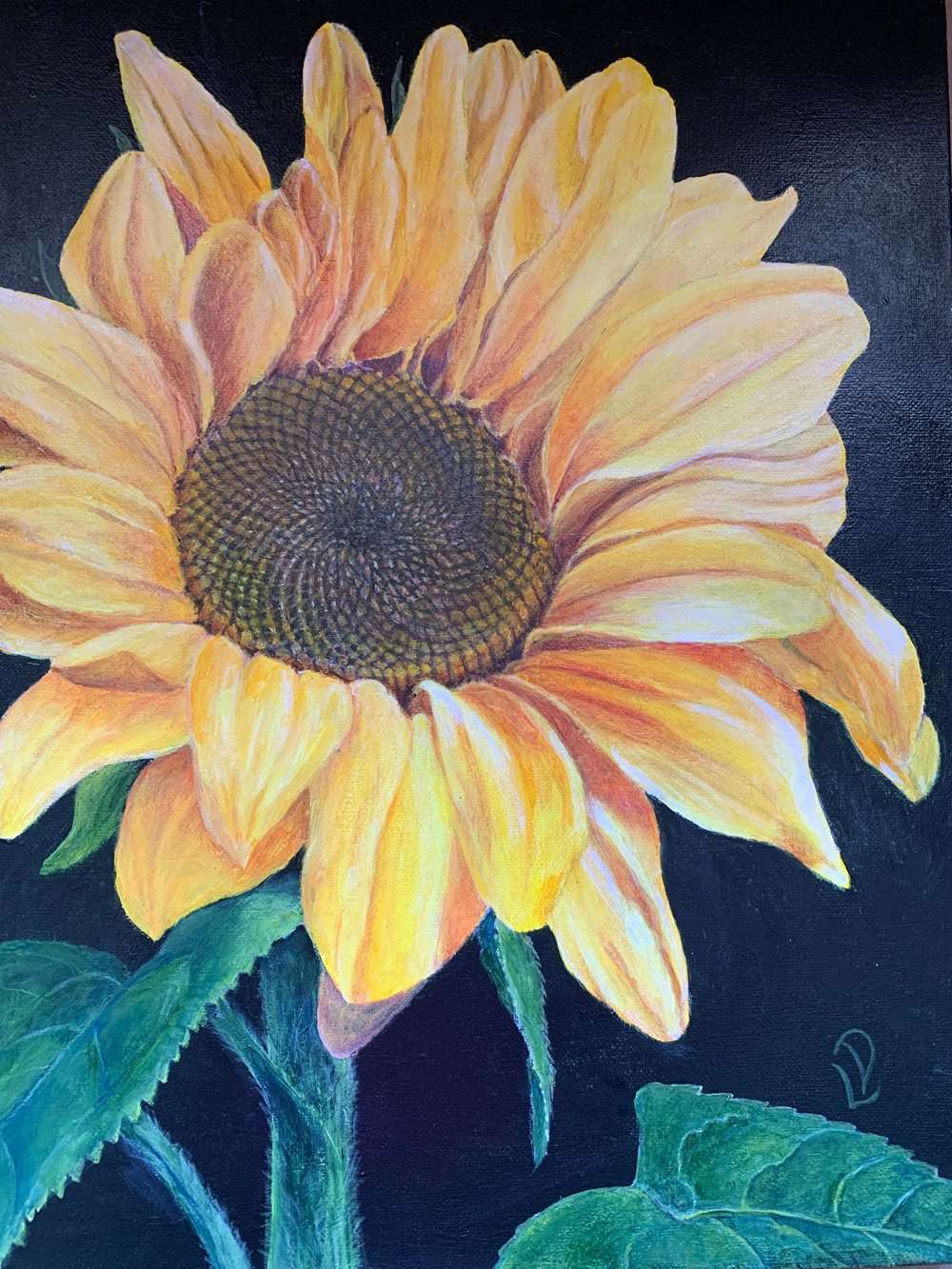 Sunflower | Linda Drover