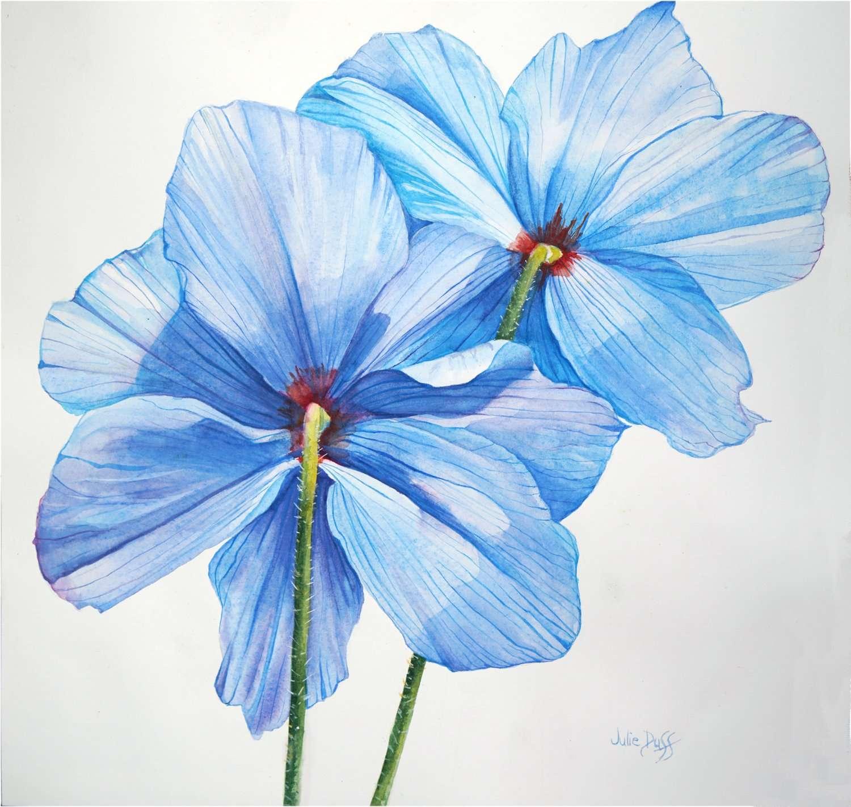 Blue Poppy | Julie Duff