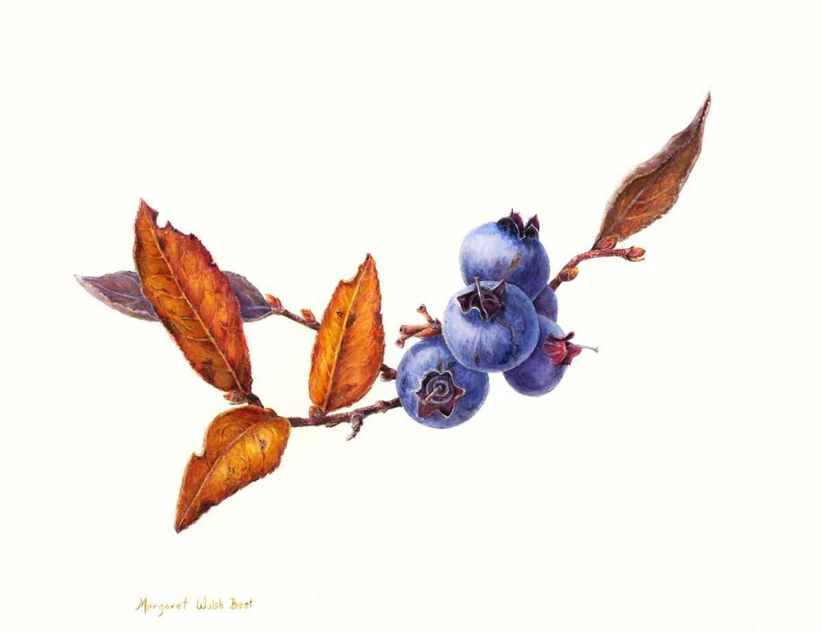 From the Berry Patch | Margaret Best